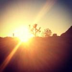 Coucher de soleil sur Joshua Tree
