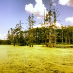 Le swamp