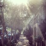 Les rues de Savannah