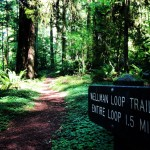 """Jedediah Smith Redwood State Park (au nord d ela Californie), lieu de tournage du """"Retour du Jedi"""""""