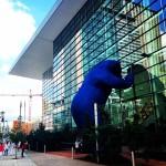 Blue bear fait du lèche vitrine