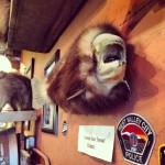 La fameuse truite à fourrure du Colorado. Jackalope style