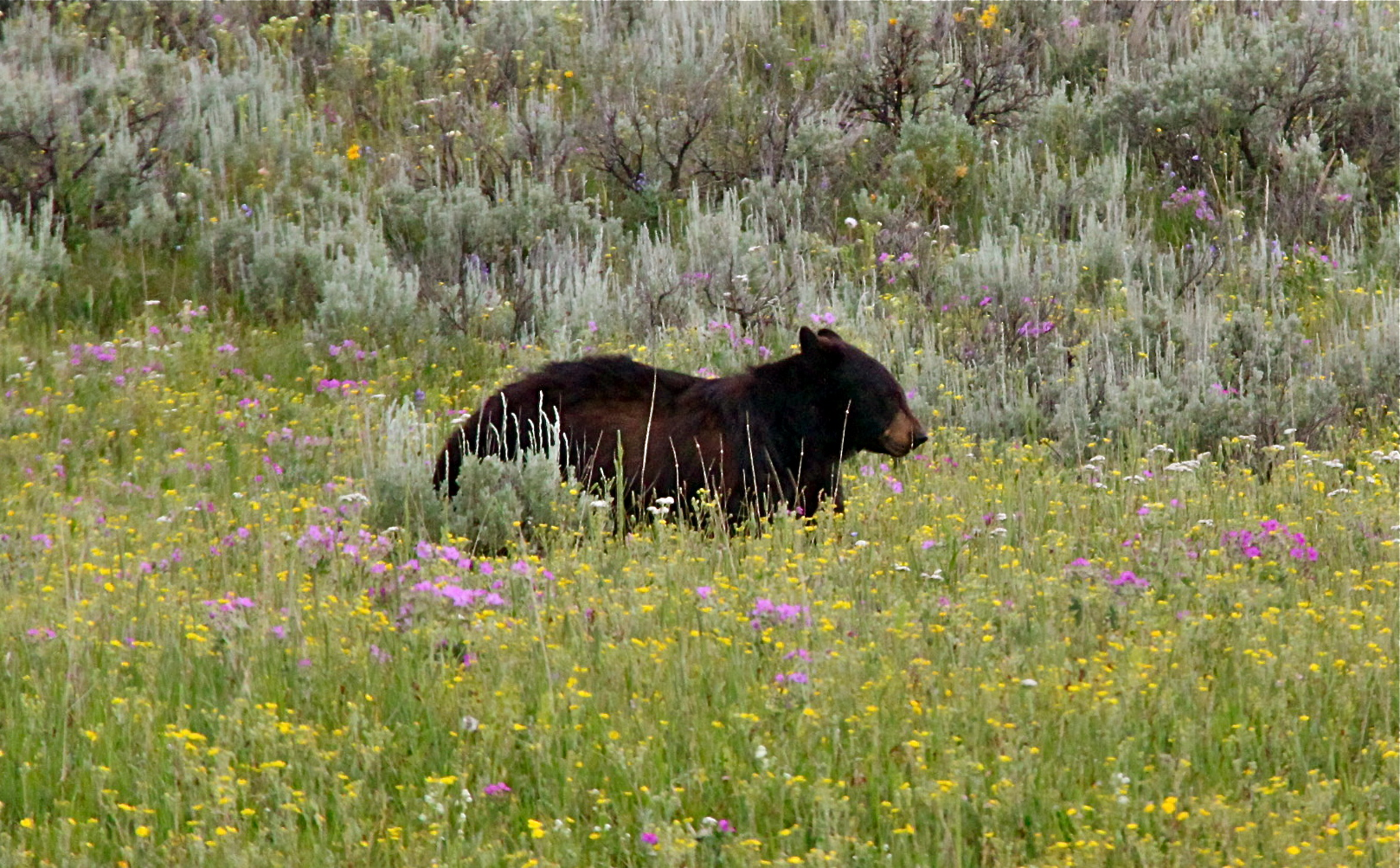Observer des animaux au Yellowstone, le guide complet | Lost In The ...