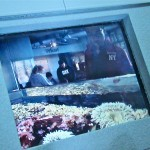 Galerie : photo 64
